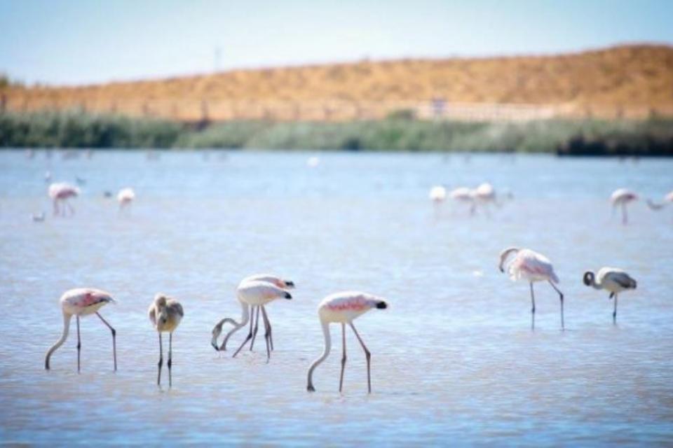 Lagoa dos Salgados - Algarve